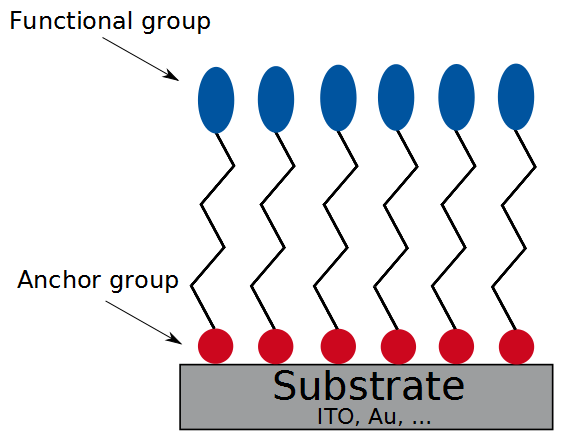 Schematic structure of a self-assembeld-monolayer