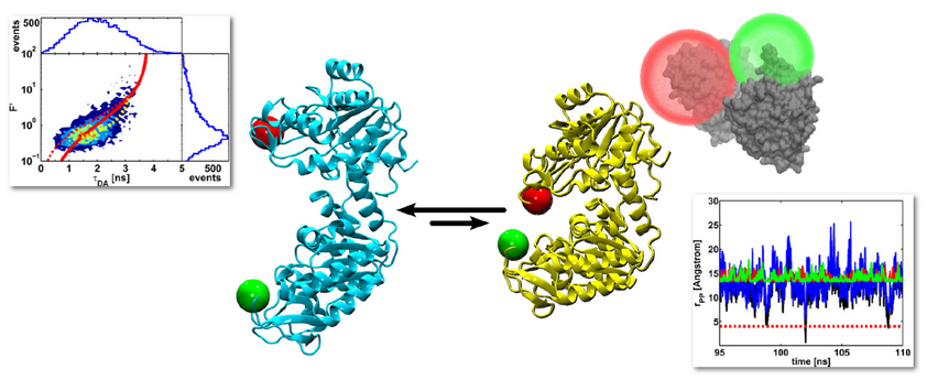 Conformational changes of protein
